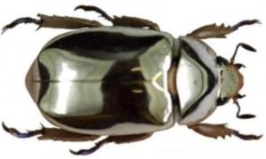 metallicbug.jpg
