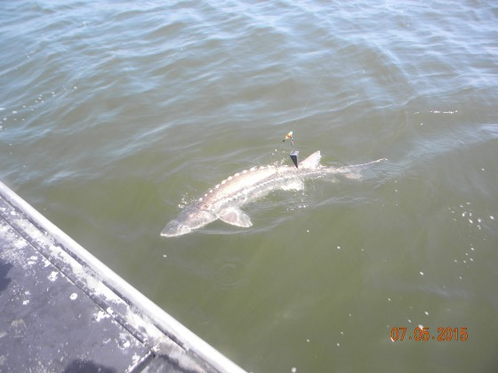 Columbia river fishing report from the trenches world for Fishing columbia river